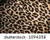 Leopard print - stock photo