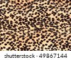 leopard print background - stock photo