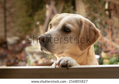 let me in please - stock photo