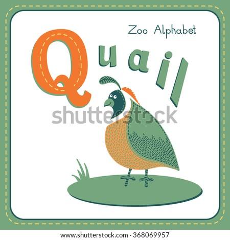Letter Q - Quail. Alphabet with cute animals. - stock photo