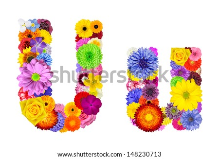Letter U of Flower Alphabet Isolated on White. Letter consist of many colorful and original flowers - stock photo