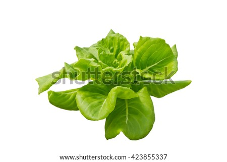 Lettuce isolated on white background, clipping path included - stock photo