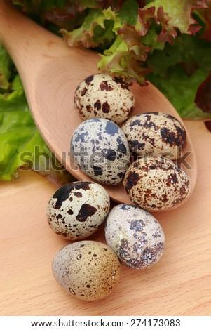 lettuce leaf and eco quail eggs - stock photo