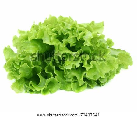 Lettuce salad isolated - stock photo