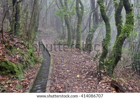 Levada dos Cedros: Fanal to Ribeira da Janela, Madeira - stock photo