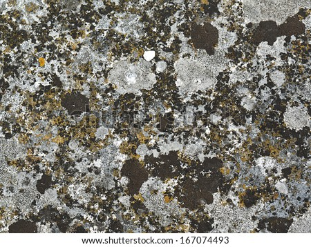 Lichen covered stone surface. Good for backgrounds. - stock photo