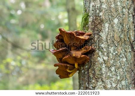 lichen on a tree - stock photo