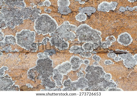 Lichens on rock. - stock photo