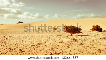 Life against desert. Corralejo desert. Fuerteventura island. Canarias. - stock photo