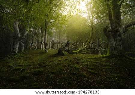 Life and death in the green forest of beech - stock photo