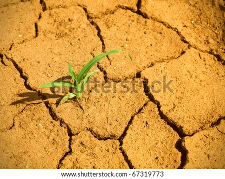 Life beginning on wasteland - stock photo