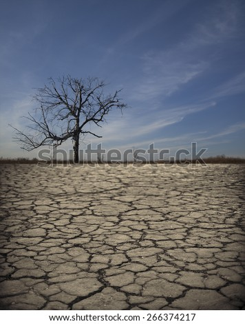 Life ecology solitude concept - lonely dry dead tree on cracked earth in desert with crack land texture soil against sky with clouds Empty concept space for inscription Idea of bad disaster in nature - stock photo