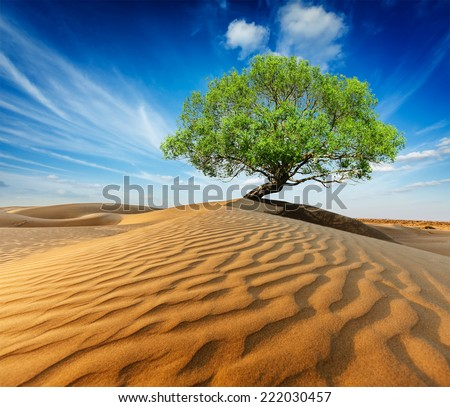 Life ecology solitude concept - lonely green tree in desert dunes - stock photo