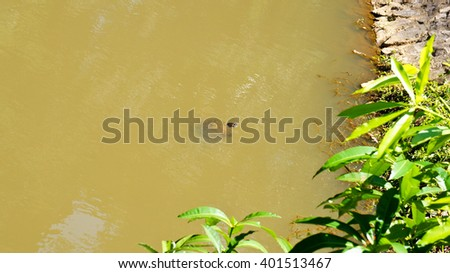 Life in the Lake - stock photo