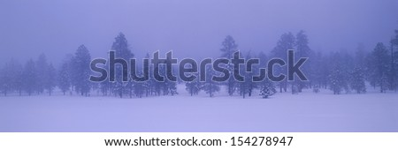 Lifting fog over row of pine trees and snow, Bryce Canyon National Park, Utah - stock photo