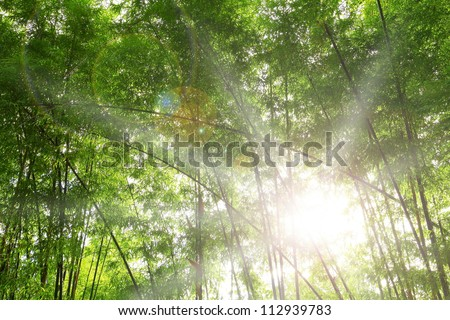 Light bamboo forest. - stock photo