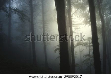 light beam in foggy forest - stock photo