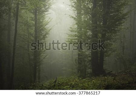 light beam in green misty forest - stock photo
