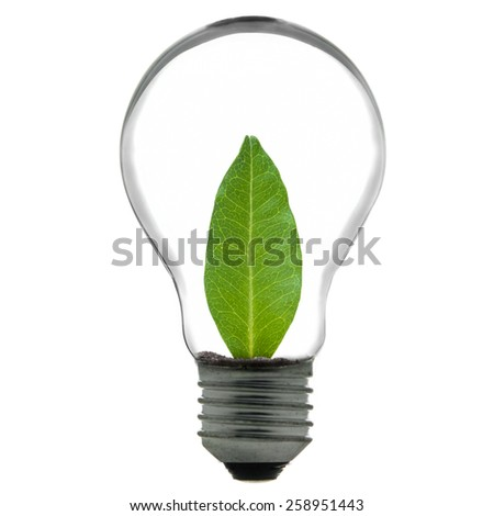 light bulb, green leaf inside isolated on white background - stock photo