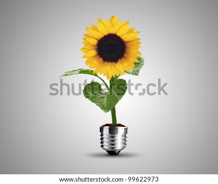 light bulb made from sunflower plant, light bulb conceptual Image. - stock photo