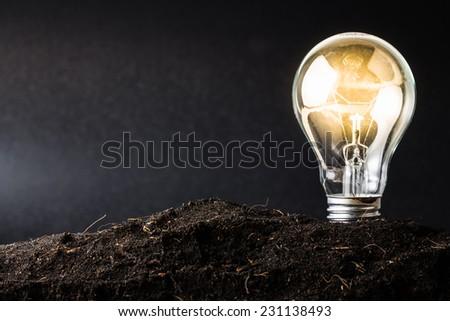 Light bulb plant in soil as idea or energy concept - stock photo