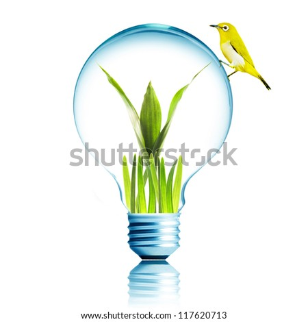 Light Bulb with green grass and green plant sprout inside and yellow bird on top. Concept for environmental conservation - stock photo