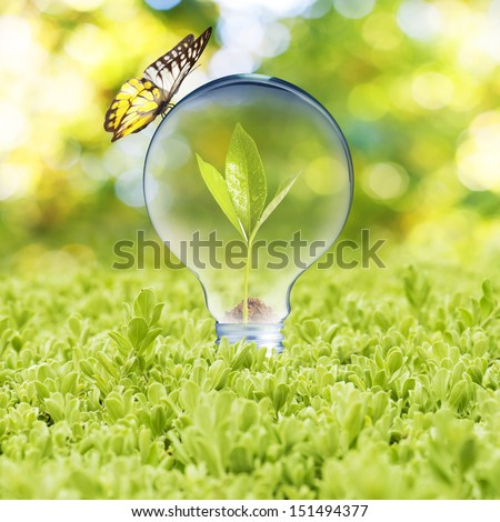 Light bulb with plant growing inside on green grass and butterfly. Concept of Eco technology - stock photo