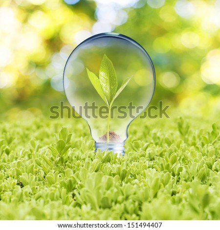 Light bulb with plant growing inside on green grass. Concept of Eco technology - stock photo