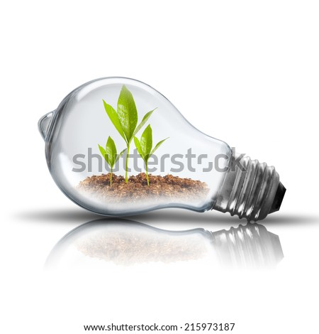 Light bulb with plant inside - stock photo