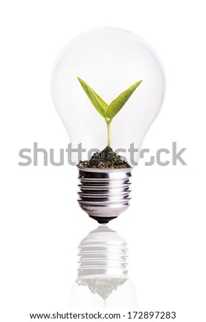 Light Bulb with soil and seed in light bulb - stock photo