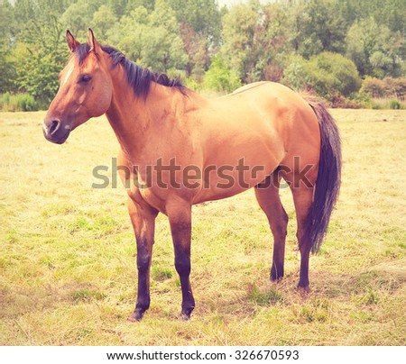 Light chestnut horse in a meadow. Toned filtered image in instagram style. - stock photo