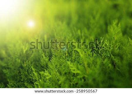 light green background - stock photo
