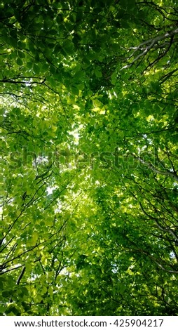 Light green beech leavs, in the forest - stock photo