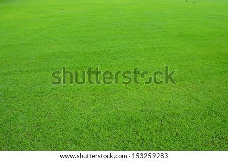 Light green lawn  - stock photo