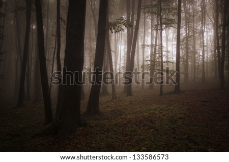 light in a forest with fog in evening - stock photo