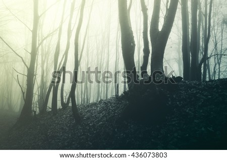 light in misty woods - stock photo