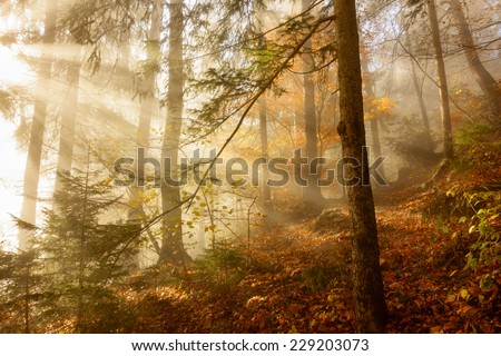 Light in the autumn forest - stock photo