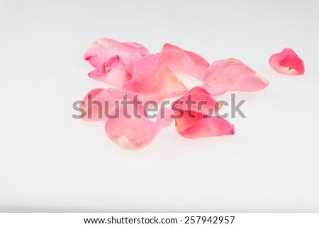 Light pink rose petal on white background - stock photo