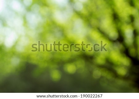Light shining on tree leaves - stock photo