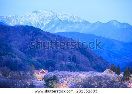 Light up of Cherry Blossoms and Japan Alps, Takato Castle Site Park, Nagano, Japan - stock photo