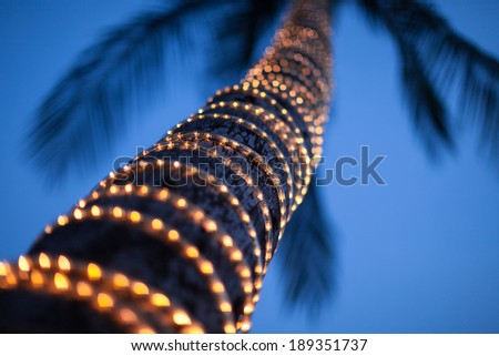 lighted coconut  by small led light bulbs those bind ed around the trunk with blue sky at twilight in the background. - stock photo