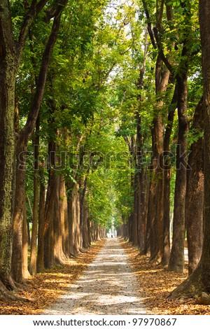 Lighting Tree Trail - stock photo