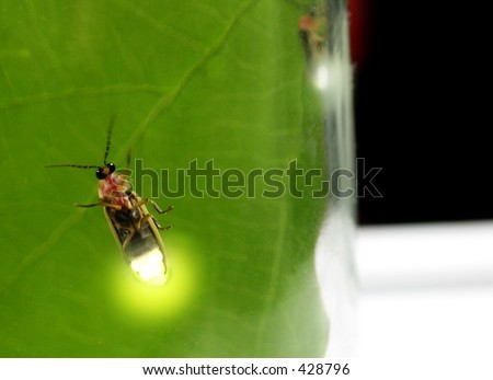 Lightning bugs(fireflies) in a jar-soft focused from diffusion through glass, enhanced with photoshop - stock photo