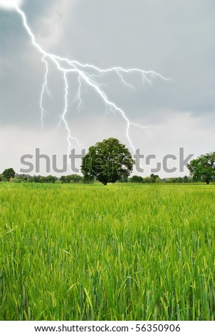 lightning in spring on a grain field - stock photo