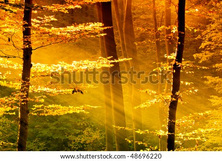 Lights of the forest - stock photo