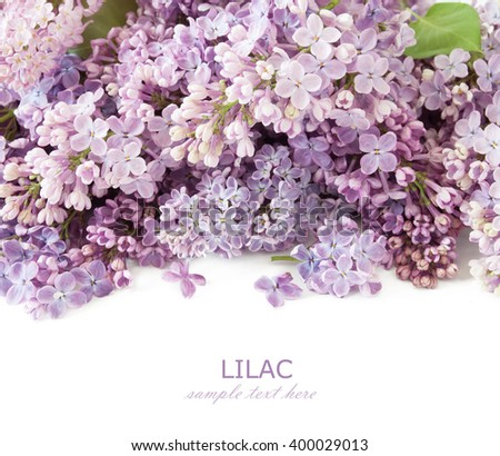 Lilac bunch isolated on white background - stock photo