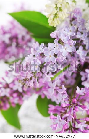 lilac flowers close up, soft focus - stock photo