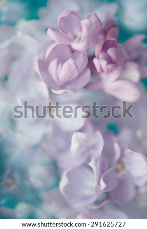 Lilac flowers - soft background - stock photo