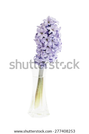 Lilac hyacinth in vase, isolated over white  - stock photo