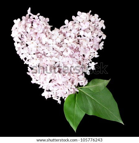 Lilac petals in heart shape isolated on black - stock photo